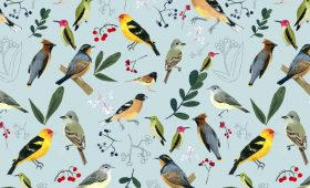Birds of Oregon  Pattern