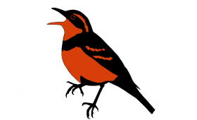 Varied Thrush Logo