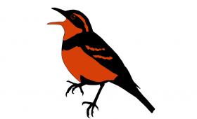 Varied Thrush Logo