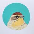 Recent Work: My Little Warbler Series
