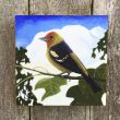 "Recent Work: ""In the Shadows (Western Tanager)"""