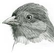 How to Bird Like an Artist