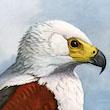 Great Bird Artists: Louis Agassiz Fuertes
