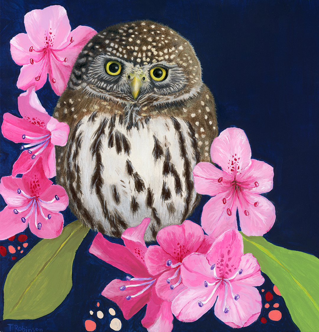 Northern Pygmy Owl mixed media painting