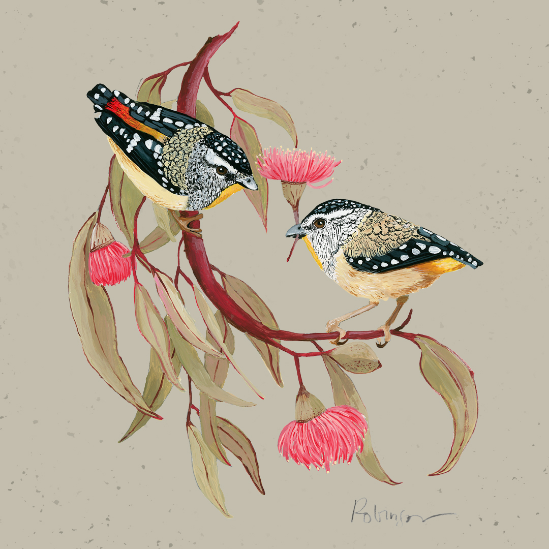 Spotted Pardalotes painting digital and acrylics